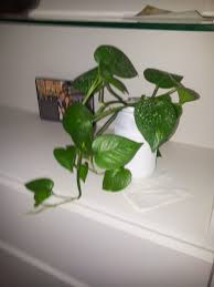 Houseplants That Don T Need Sunlight Dress Up Your Home With These Indoor Plants That Don 39 T Need
