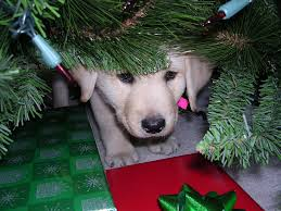 are you giving a christmas puppy as a gift the dog guide