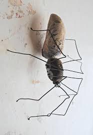 147 best divine spiders images on pinterest spider webs animals