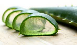 How To Encourage Hair Growth Aloe Vera For Hair Loss The Magical Plant Hold The Hairline