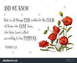 quotes from the sales bible bible verse red poppies passage romans stock illustration
