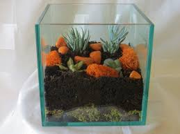 terrarium containers home depot with simple cube glass containers