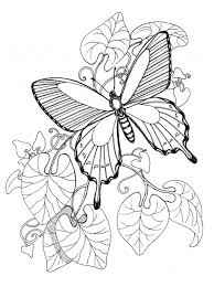 detailed butterfly coloring pages for adults adult printable adult coloring pages printable butterfly