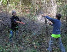 native alternatives to invasive plants invasive species southern appalachian highlands conservancy