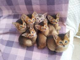 the kuwait cats and kittens adoption and sales email us at