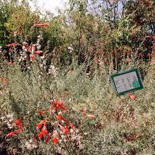 Native Plant Nursery Los Angeles Ca Floral Native Nursery Nurseries U0026 Gardening 2511 Floral Ave
