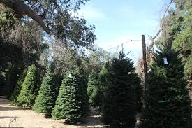 get a great deal on your christmas tree at wickerd farm menifee 24 7