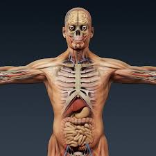 3d Human Anatomy Atlas Visible Body 3d Human Anatomy Atlas Free Download Amazing 10
