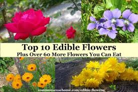 Edible Flowers Top 10 Edible Flowers Plus Over 60 More Flowers You Can Eat
