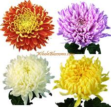 fresh flowers in bulk buy bulk football mums wedding flowers at wholesale pricing bulk