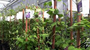 native plant centre the greenery garden centre bedding plant nursery youtube youtube