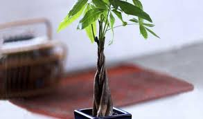 best office plants buy zz plant top 5 plants to bring goodluck
