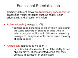 How Is Color Blindness Caused Visual Cognition I Basic Processes What Is Perception Good For
