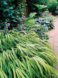 best 25 best grass for shade ideas on ornamental