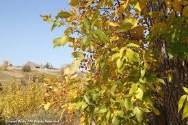 manitoba native plants cree janet davis explores colour