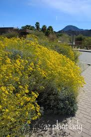 tucson native plants enjoying the sun no sunscreen required ramblings from a