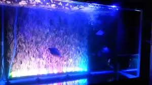 color changing led fish tank lights marineland color changing led bubble wand youtube
