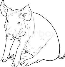 drawing pig white background vector illustration stock