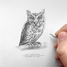 The Owl Barn Gift Collection Owl Pencil Drawing 16 50 The Indian Scops Owl Art Original