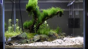Aquascape Tree That Tree By The Beach U0027 Nano Aquascape Week 6 Youtube