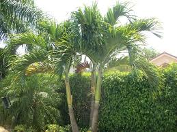 landscape palm trees palm tree tropical landscape types of