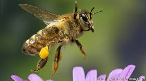 neonicotinoids can harm some bees buzz kill