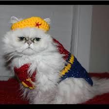 Persian Halloween Costumes 30 Pet Cat Halloween Costumes 2017 Cute Ideas Cat Costumes