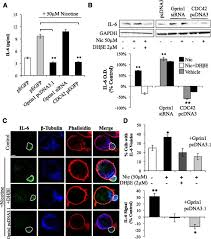 the α4 nicotinic receptor promotes cd4 t cell proliferation and a