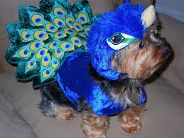 Squirrel Dog Halloween Costume Peacock Dog Costume Shipping Baxterboo