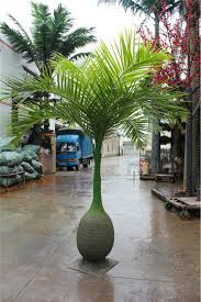 high quality artificial coconut palm trees on sale buy