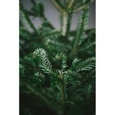 christmas tree delivery christmas tree 4ft nordman fir london delivery