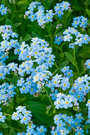50 flowers you should have in your garden gardens flower and