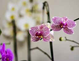 orchid pictures orchid flower images pixabay free pictures