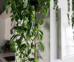 low light loving houseplants perfect for a small apartment with