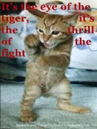 Eye Of The Tiger Meme - lili powers babykitty262 on pinterest