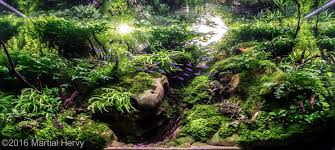 Aga Aquascape 2016 Aga Aquascaping Contest Entry 26 Aquascape Pinterest