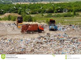 truck working in landfill with birds looking for food garbage on