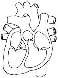 black and white heart diagrams human heart sketch with parts