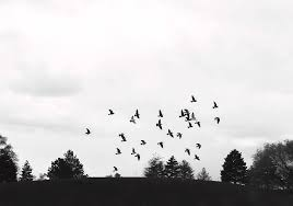 flying away photograph by konstantin khanov