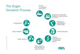 dso german organ transplantation foundation dso