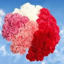 Wholesale Carnations Message Cards For Your Sweetheart Wholesale Carnations Roses