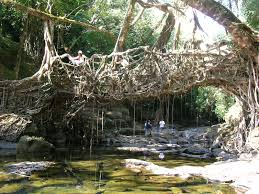 welcome to traveltoolset living root bridges of meghalaya