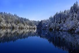 cool trees lakes trees reflection cool cool wallpapers for hd 16 9 high