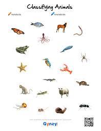 free printable worksheets vertebrates invertebrates worksheet vertebrates invertebrates worksheets