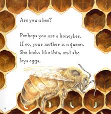 are you a bee judy allen macmillan