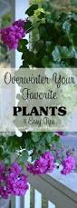 overwintering your favorite plants winter colors plants and gardens