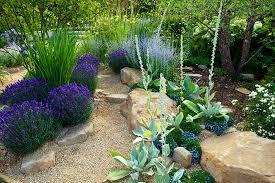 planting native plants in your sacramento landscape design zone 9b