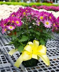 strange u0027s florists greenhouses and garden centers richmond