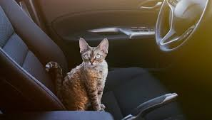 how to travel with a cat images Tips for how to travel with your cat in a car for long distances