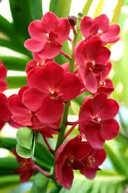 Plant Flower Garden - best 10 orchids garden ideas on pinterest orchid care orchid